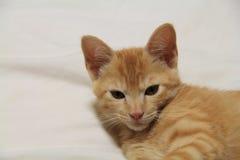 gatinhos Fotografia de Stock