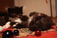 gatinhos adoráveis e bolas de vidro foto de stock