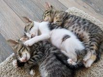 Gatinhos adoráveis que dormem junto abraçando! foto de stock royalty free