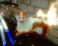 Gatinhos agradáveis pet Gatinho alaranjado foto de stock royalty free