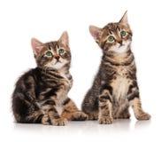 Gatinhos bonitos Imagem de Stock Royalty Free