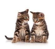 Gatinhos bonitos Fotos de Stock