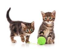 Gatinhos bonitos Imagens de Stock Royalty Free