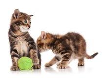 Gatinhos bonitos Fotografia de Stock
