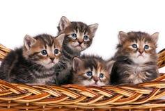 Gatinhos bonitos Fotos de Stock Royalty Free
