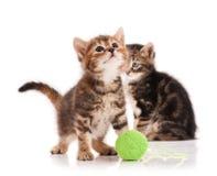 Gatinhos bonitos Fotografia de Stock Royalty Free