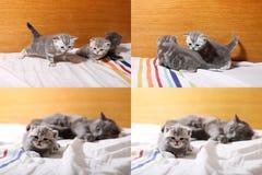 Gatinhos bonitos do bebê que jogam no quarto, cama, telas da grade 2x2 do multicam Fotografia de Stock Royalty Free