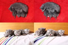 Gatinhos bonitos do bebê que jogam no quarto, cama, telas da grade 2x2 do multicam Foto de Stock