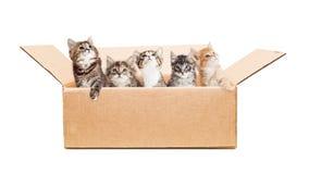 Gatinhos bonitos em uma caixa de cartão Foto de Stock Royalty Free