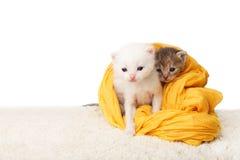 Gatinhos bonitos no algodão amarelo Imagem de Stock
