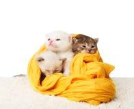 Gatinhos bonitos no algodão amarelo isolado Fotos de Stock Royalty Free