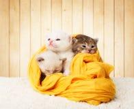 Gatinhos bonitos no algodão amarelo no fundo de madeira Fotos de Stock Royalty Free