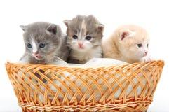 Gatinhos bonitos pequenos que sentam-se em uma cesta, close-up Imagens de Stock Royalty Free
