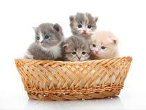 Gatinhos bonitos pequenos que sentam-se em uma cesta, close-up Fotografia de Stock