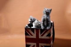 Gatinhos bonitos que olham acima Fotografia de Stock Royalty Free