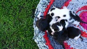 Gatinhos cegos com olhos fechados os gatos bonitos são encontrar-se adormecido vídeos de arquivo