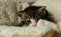 gatinhos Criaturas pequenas, bonitas Imagem de Stock