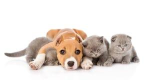 Gatinhos do abraço do cachorrinho de Stafford Isolado no fundo branco Fotos de Stock