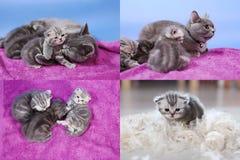 Gatinhos do bebê que jogam no fundo malva, multicam imagens de stock