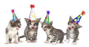 Gatinhos do canto da canção do aniversário no fundo branco Imagens de Stock