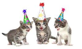 Gatinhos do canto da canção do aniversário no fundo branco Fotos de Stock Royalty Free