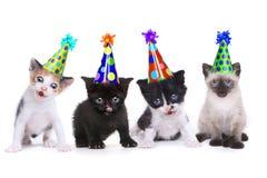 Gatinhos do canto da canção do aniversário no fundo branco Fotografia de Stock Royalty Free