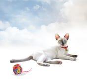 Gatinhos do gato Fotografia de Stock