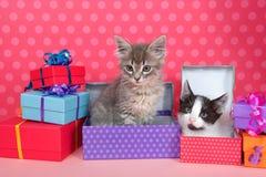 Gatinhos do gato malhado em presentes de aniversário Imagem de Stock