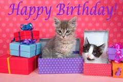 Gatinhos do gato malhado em presentes de aniversário Imagens de Stock Royalty Free