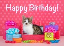 Gatinhos do gato malhado em presentes de aniversário Fotos de Stock Royalty Free