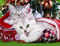 Gatinhos do Natal Imagens de Stock Royalty Free