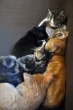 Gatinhos do sono Fotografia de Stock Royalty Free