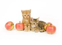 Gatinhos e maçãs Foto de Stock