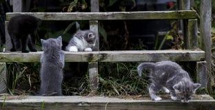 Gatinhos em escadas de madeira foto de stock