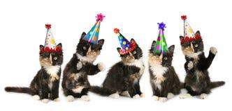 5 gatinhos em um fundo branco com chapéus do aniversário Fotografia de Stock Royalty Free