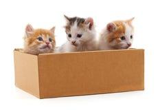 Gatinhos em uma caixa Imagens de Stock