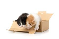 Gatinhos em uma caixa Fotos de Stock