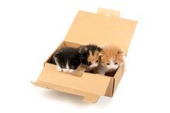 Gatinhos em uma caixa Imagem de Stock Royalty Free