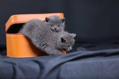 Gatinhos em uma caixa alaranjada Fotos de Stock Royalty Free