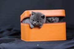 Gatinhos em uma caixa alaranjada Imagens de Stock