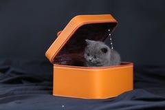 Gatinhos em uma caixa alaranjada Fotografia de Stock Royalty Free