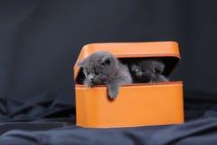 Gatinhos em uma caixa alaranjada Foto de Stock