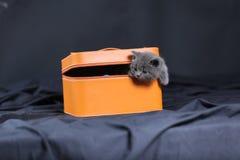 Gatinhos em uma caixa alaranjada Imagens de Stock Royalty Free