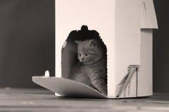 Gatinhos em uma caixa branca Fotos de Stock
