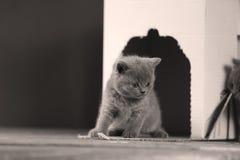 Gatinhos em uma caixa branca Imagens de Stock