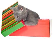 Gatinhos em uma caixa colorida Fotografia de Stock Royalty Free