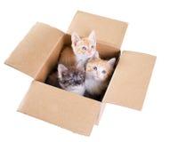 Gatinhos em uma caixa de cartão Imagem de Stock Royalty Free