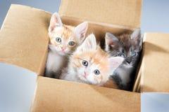 Gatinhos em uma caixa de cartão Imagens de Stock