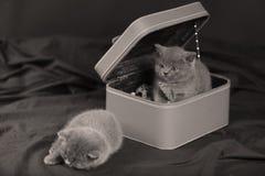 Gatinhos em uma caixa pequena Foto de Stock