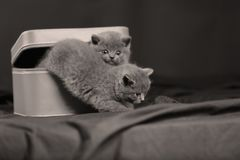 Gatinhos em uma caixa pequena Fotografia de Stock Royalty Free